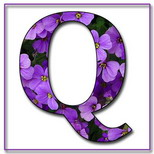 Felicitari cu nume de baieti: Litera Q