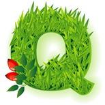 Cartoline con nomi di auguri: Lettera Q
