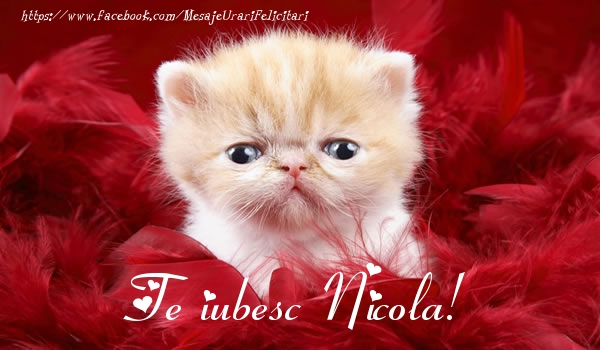 Felicitari de dragoste   Te iubesc Nicola!